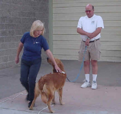 Photo of Ginger inspecting a student's dog during Stand For Examination exercise